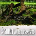 Suikei Aquapaisagismo