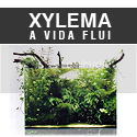 Xylema